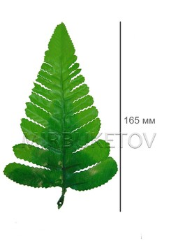 Большой лист одиночного папоротника L022