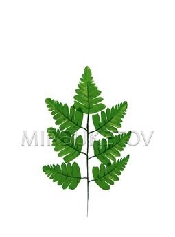 Лист папоротника на 7 листов средний, высота 370 мм L032