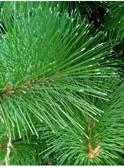 Искусственная сосна с зелеными иголками, 0.7-3.00 м, Pine001