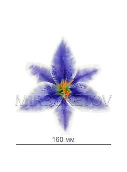 Лилия атласная, 160 мм