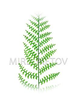 Лист Многорядника пластмассовый, 460 мм