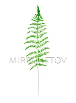 Лист Зубчатого папоротника пластмассовый, 430 мм, L205