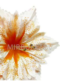 Пресс-цветок с большой вставкой Орхидея, атлас, 140 мм, E15+B