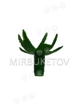 Тычинка гвоздик с усиками на утолщенные ветки