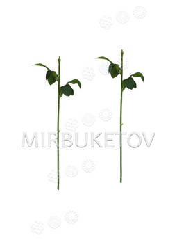 Ножка одиночная с тройными зубчатыми листьями, Люкс, 330 мм