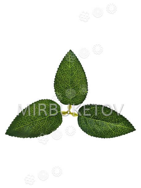 Искусственный Лист тройной, зеленый с прожилками, 180x100 мм, VIP
