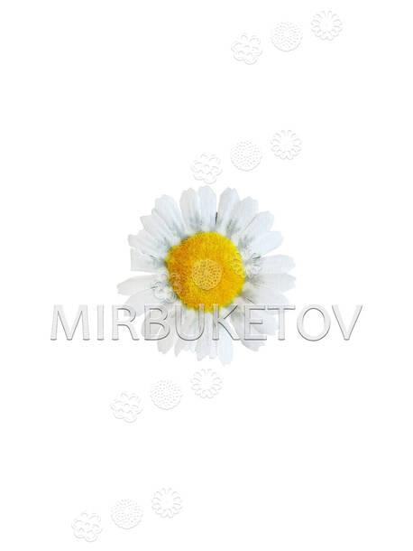 Ромашка искусственная, белая, шелк, 65 мм