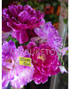 Искусственные цветы букет Пиона, 6 голов, 640 мм