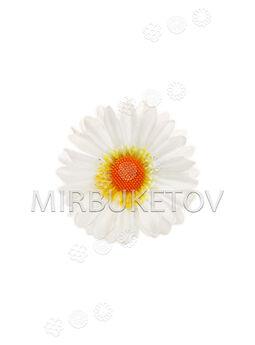 Искусственные цветы Герберы, белый, шелк, 90 мм