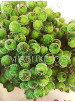Добавка калина с капельками, зеленый, 140 мм