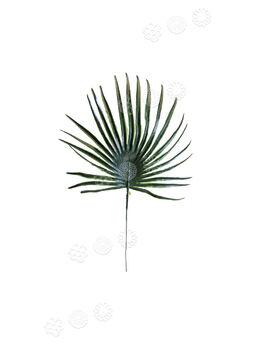 Лист пальмы пластмассовый, темно-зеленый, 300 мм