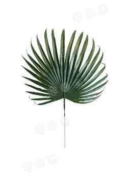 Лист пальмы пластмассовый, темно-зеленый, 420x270 мм