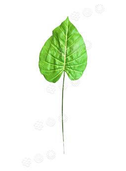 Лист Антуриума на ножке, зеленый с прожилками, высота 470 мм